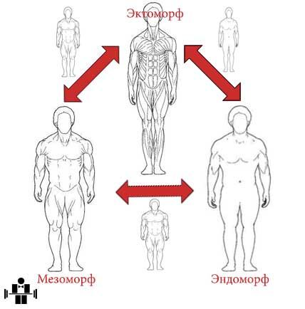 tipi-teloslogeniya. somatotipi