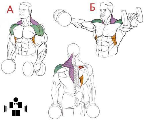 Подъем гантелей через стороны до уровня плеч