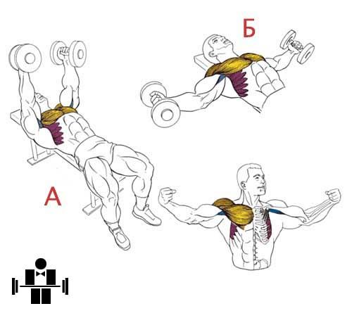 Упражнение разведение гантелей лежа
