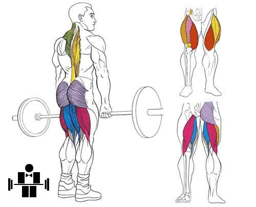 Упражнение становая тяга