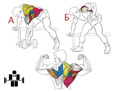 Упражнение тяга гантели в наклоне спина