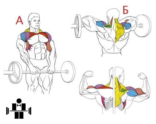 Упражнение тяга штанги к подбородку