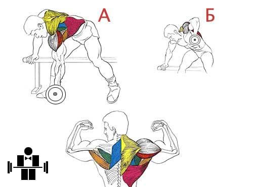 Упражнение тяга гантели в наклоне дельта