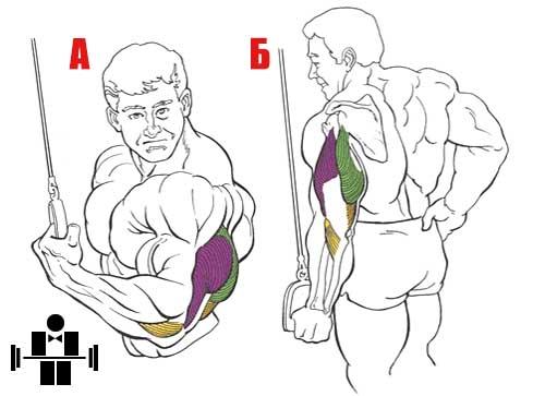 Упражнение жим вниз одной рукой обратным хватом