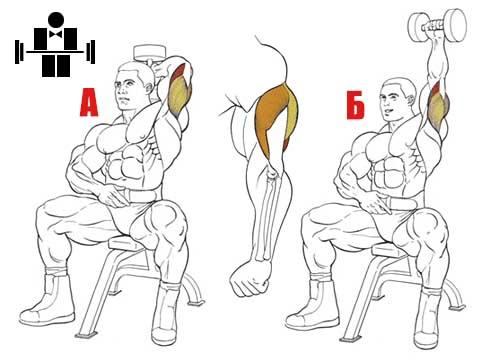 Упражнение разгибание из-за головы