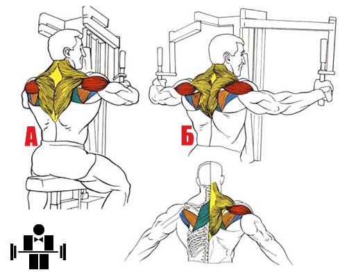 Упражнение разведения в тренажере Peck-Deck