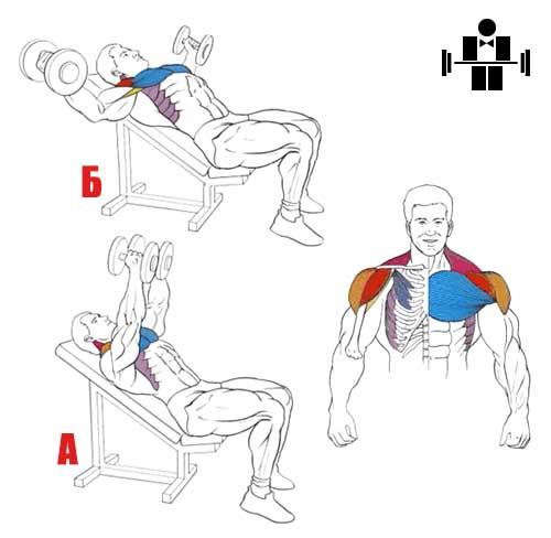 Упражнение разведение гантелей на наклонной скамье с наклоном вверх