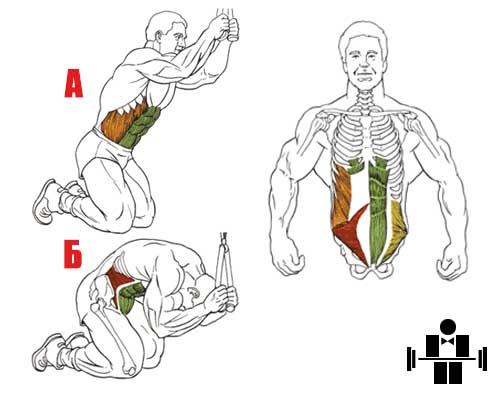 Упражнение скручивания на коленях в блочном тренажере