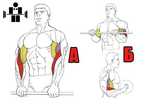 podem_shtangi_na_biceps_obratnim_hvatom