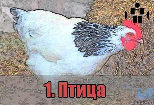 belkovaya_eda_ptica_1
