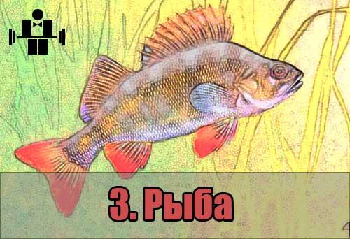 belkovaya_eda_riba_3