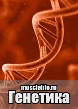 genetika_bodybuilding