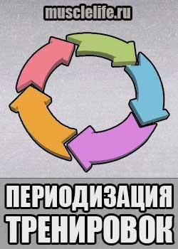 periodizaciya_trenirovok